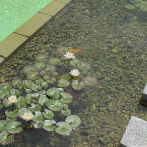 Biopiscina giardino privato